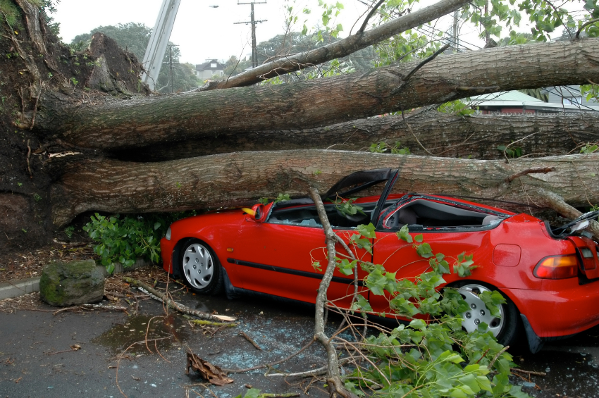 red car crushed by large tree