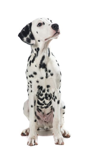 Travelers Insurance Dog Breed Restrictions