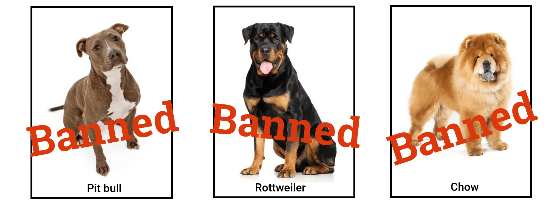 Study Pit Bulls And Rottweilers Most Often Banned By Home Insurers